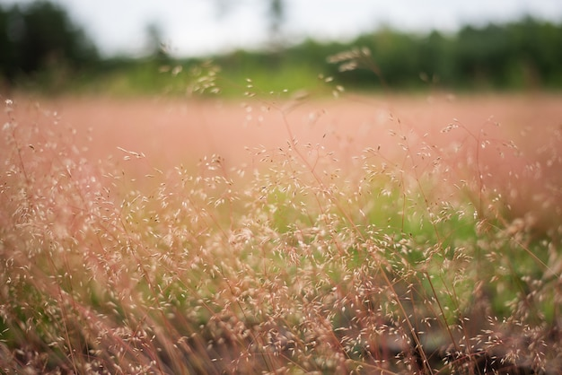 Field in the grass, against the background of the forest. background texture