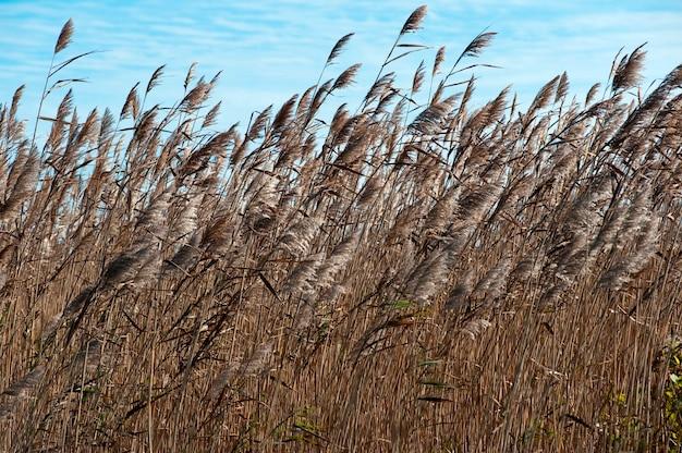 Field of grass, the hamptons, new york