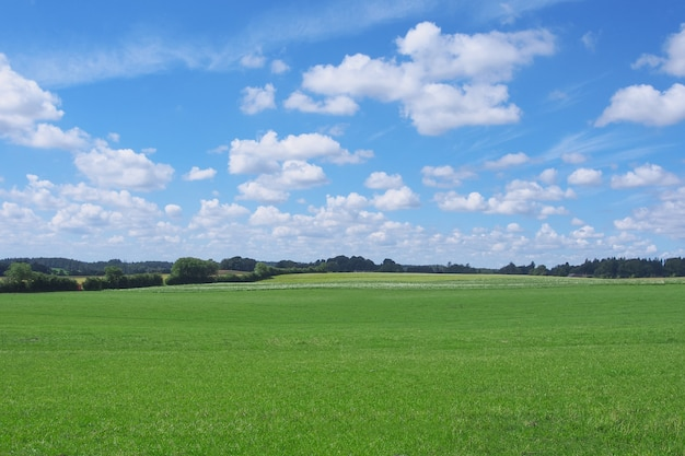 Field of grass and perfect sky in summer