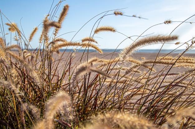 햇빛의 대초원 영역에서 필드 잔디를 닫습니다. 여름 자연.