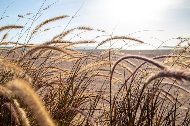 Field grasses in the steppe zone in sunlight close up. summer nature.