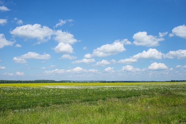 Field of green grass and blue cloudy sky.