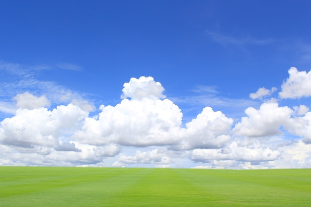 Field green grass blue sky with cloud cloudy landscape background
