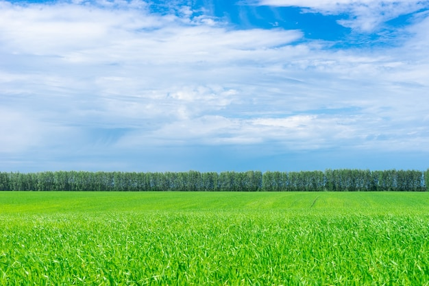 Field of green grass and trees in the distance