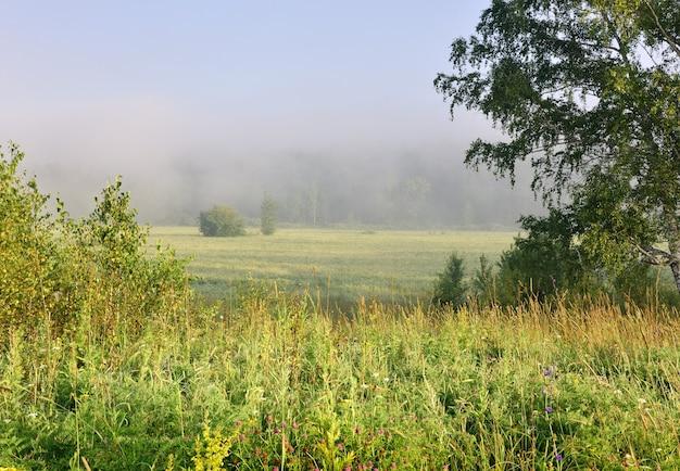 Поле в утреннем тумане
