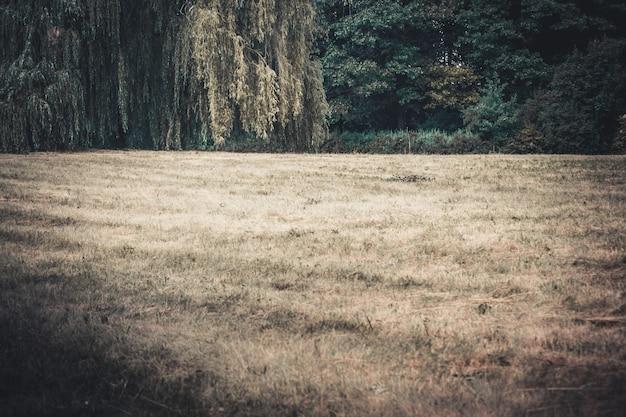 Поле луг деревья сосны небо облака копировать пространство
