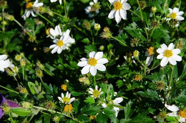 Поле ромашек в солнечный день на природе. ромашки цветы ромашки, полевые цветы, цветы ромашки, весенний день