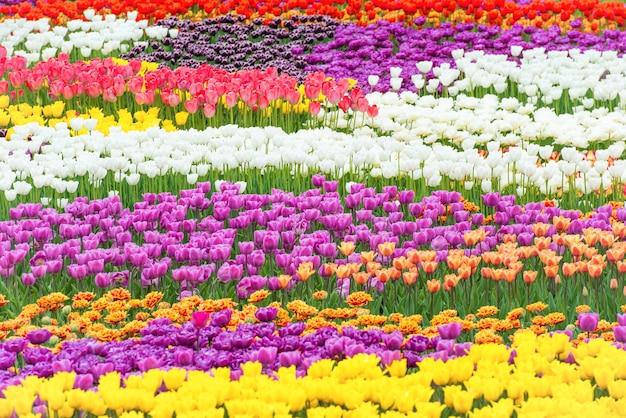 녹색의 아름다운 공원에 있는 화려한 꽃 튤립 들판