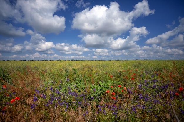 Поле цветов, против голубого неба с белыми облаками