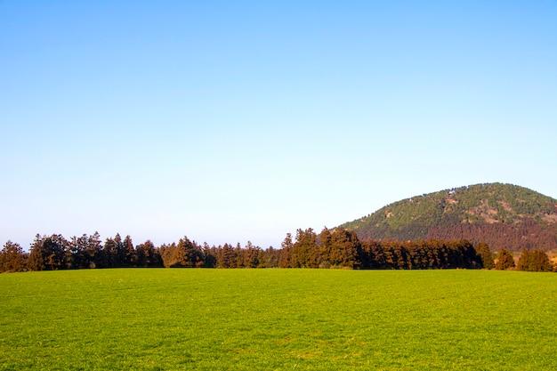 제주도에서 잔디와 완벽한 하늘의 분야