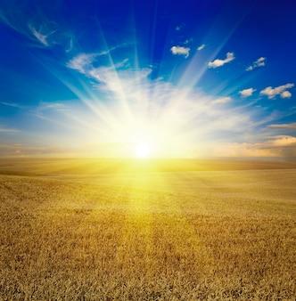 Поле травы. луг пшеница под небом