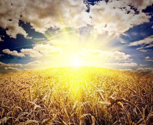 하늘 아래 잔디 초원 밀의 필드