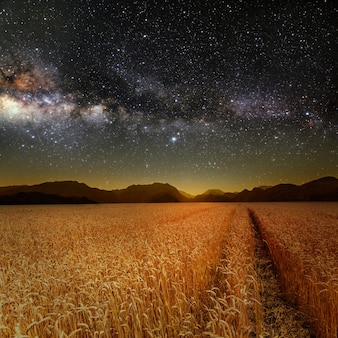 잔디 필드입니다. 별 하늘 아래 초원 밀입니다. nasa에서 제공한 이 이미지의 요소