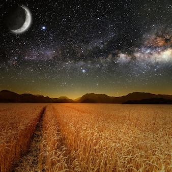 Поле травы. луг пшеницы под звездным небом. элементы этого изображения предоставлены наса