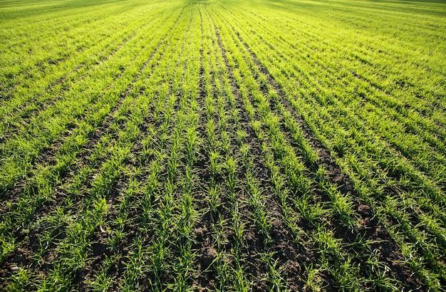 Поле травы Premium Фотографии