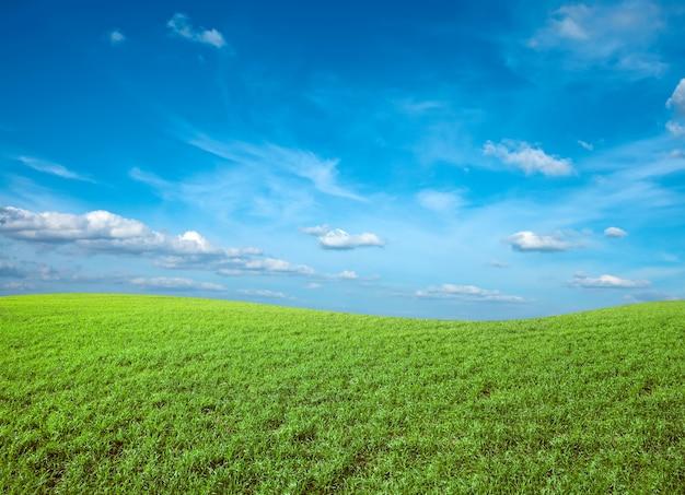 青い空の下で緑の新鮮な草のフィールド