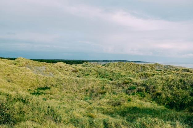 美しい曇り空の下で海の近くの緑の芝生のフィールド