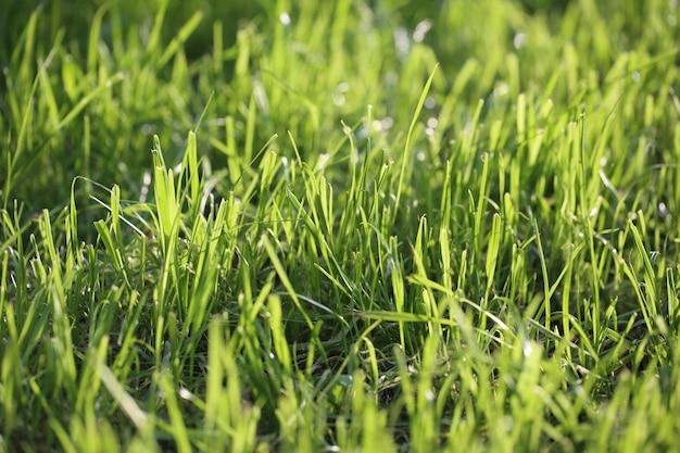 푸른 잔디의 필드