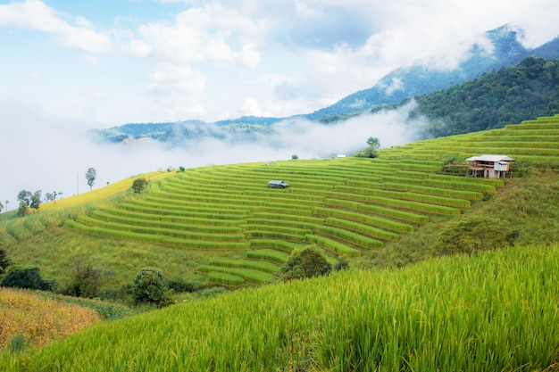 구름과 함께 장마철에 산에 쌀의 필드입니다.