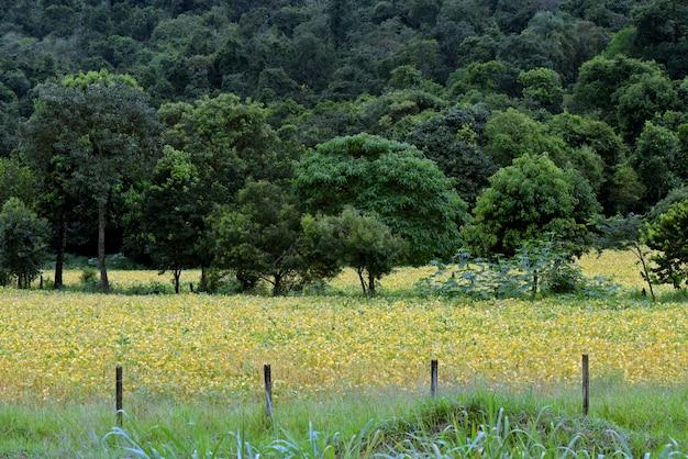 熟した大豆畑