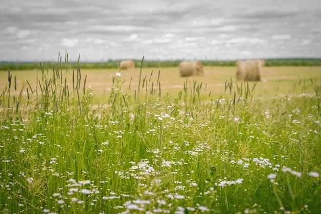 Поле пшеницы и цветов тюки сена в поле