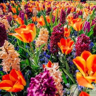 野生の花のフィールド。オランダの春の風景