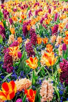 野生の花のフィールド。