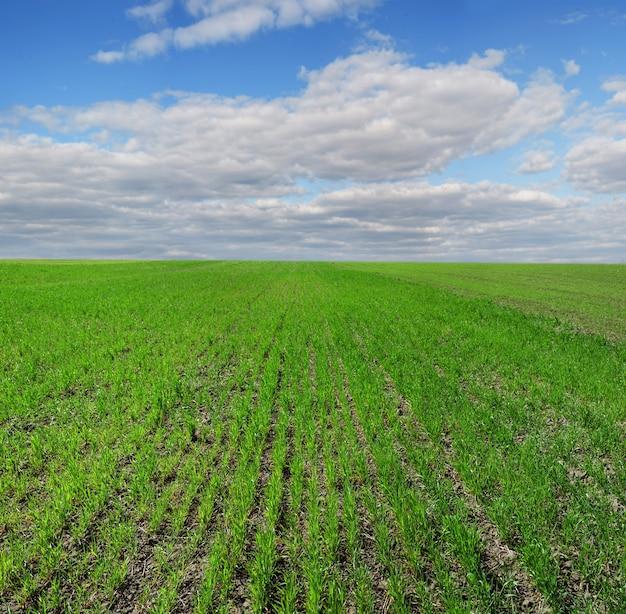 겨울 밀의 분야, 봄의 행, 아름다운 흐린 하늘