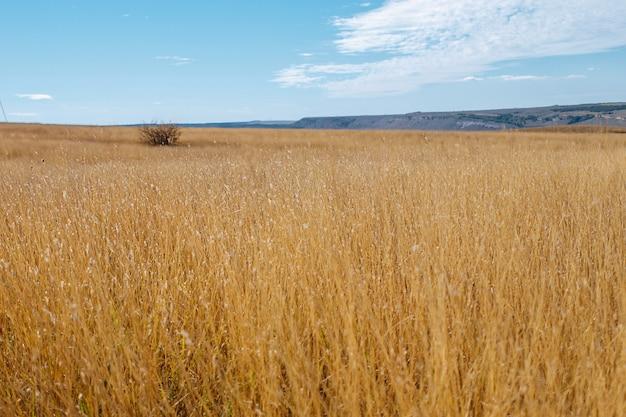 배경 가을 풍경에 맑고 푸른 하늘과 화창한 날에 노란색 마른 풀밭