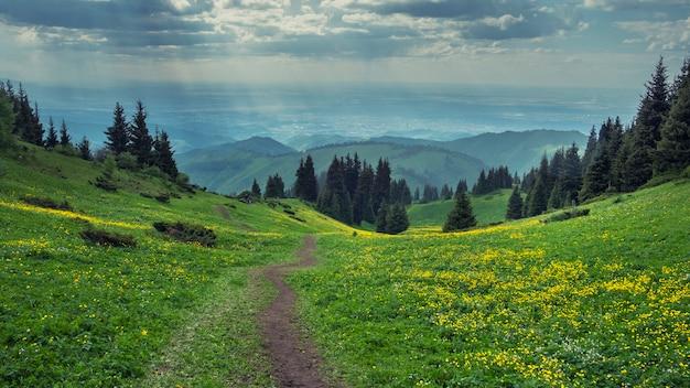 山の夜の春の針葉樹林の中で黄色い花のフィールド