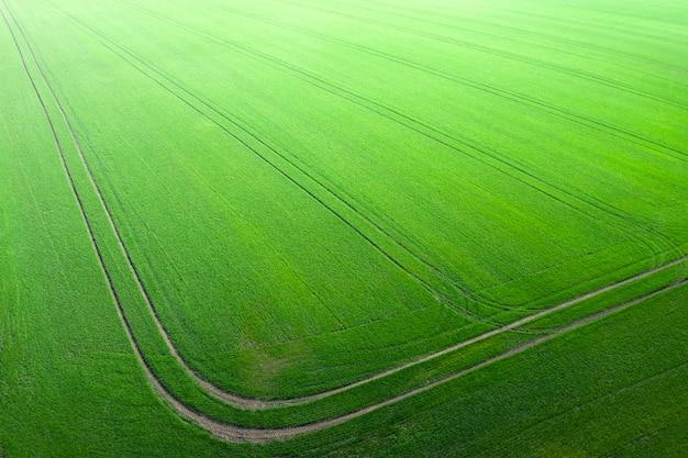 若い緑の小麦の分野、および技術的なトラック。農地の不思議。ドローンビュー。