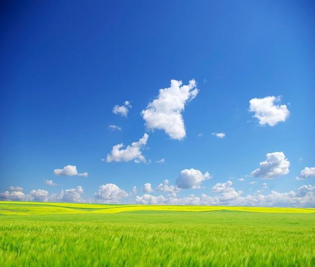 青い空を背景にフィールド