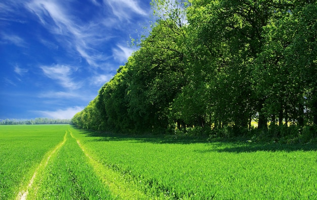 青空を背景にした野原