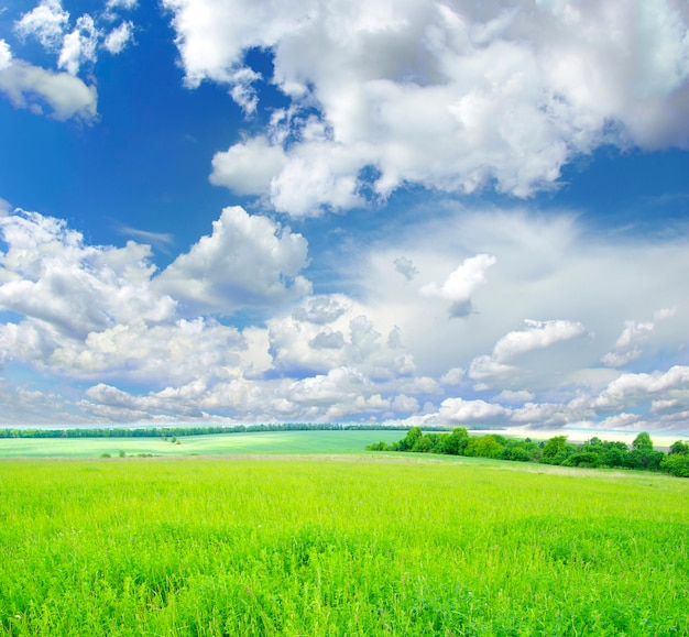 푸른 하늘을 배경으로 펼쳐진 들판