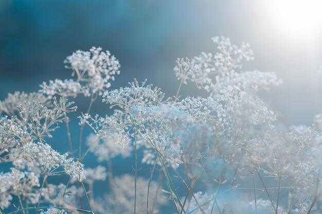 Field plant background on winter blue