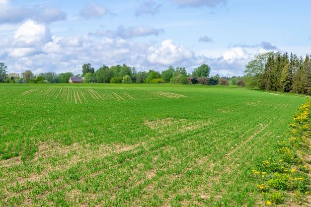 Поле вспахано и засеяно, ровные линии зеленых растений. сельский пейзаж с возделываемым полем