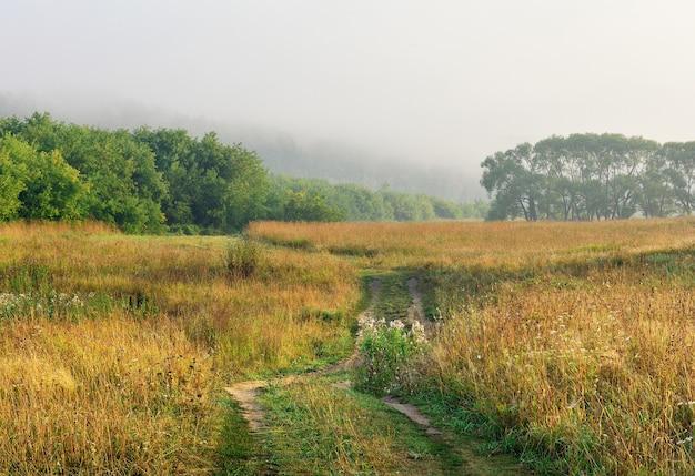 Полевая дорога среди травы и деревьев