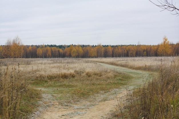 野原、道路、黄色の葉のある木々