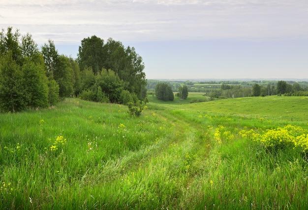 여름의 필드 도로 푸른 잔디와 노란 야생화가 있는 초원에서 바퀴 트랙