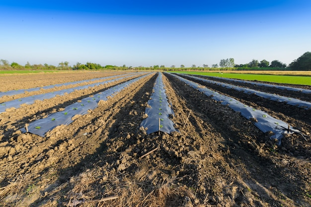 The field soil reclamation in preparation for seeding or planting