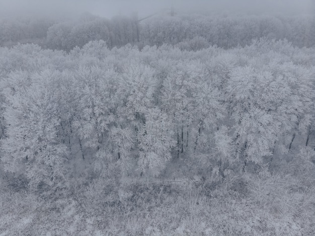Field and white frozen trees in fog in winter background