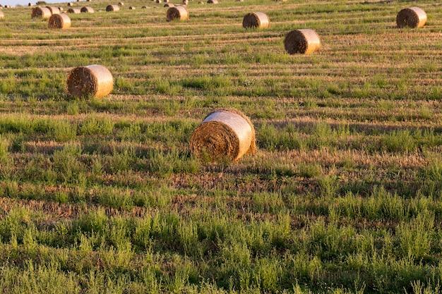 新しい作物のある畑