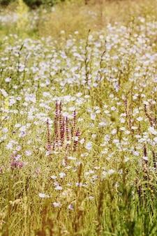 さまざまな花が咲く畑、フィルター