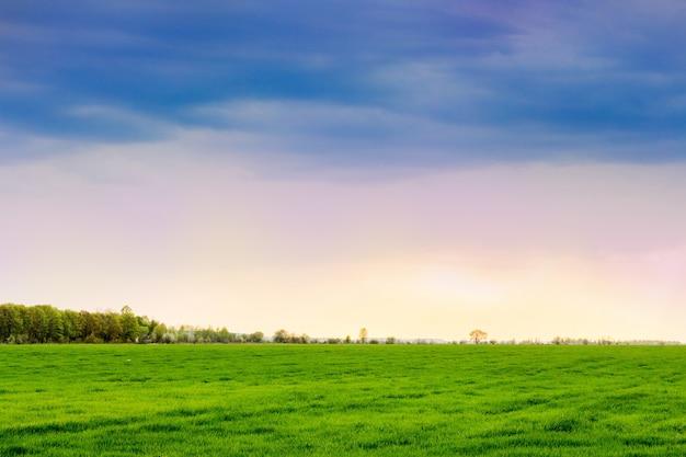 日没時に明るい緑の草と曇り空のフィールド