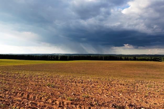 옥수수 필드. 봄 시즌에 뇌우 동안 풍경.