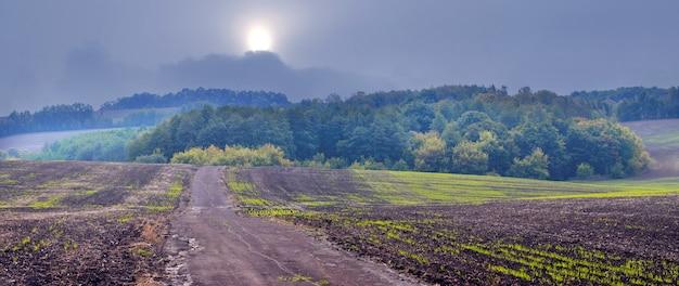 秋の憂鬱な天気の中で冬小麦と遠くの森の作物があるフィールド