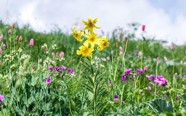 Поле с цветущими растениями, травами и цветами
