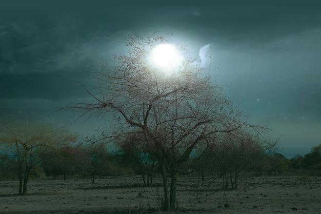 月明かりの霧のフィールド