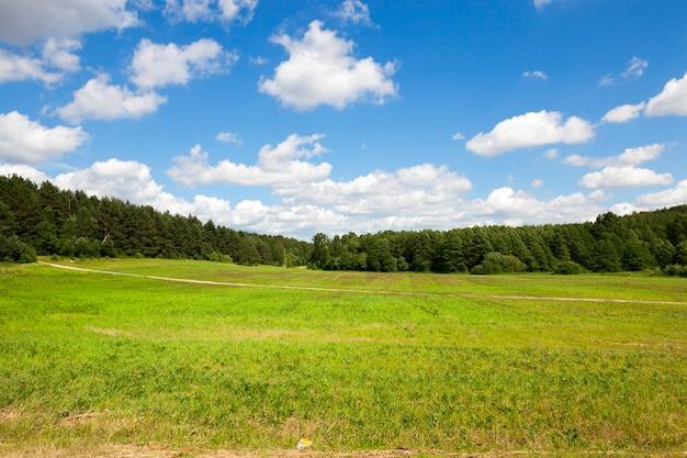 Поле с травой и лесом с деревьями против голубого неба. через поле проходит тонкая полоса от проселочной дороги