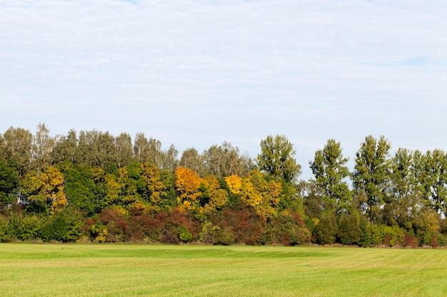 Поле с зеленой травой